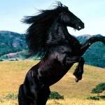 Stallion Race Kaydol – Oyna